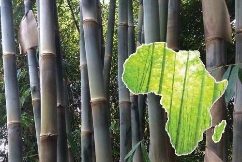 bamboefietsen zijn duurzaam en eerlijk bamboefietsen.nl